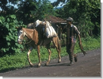 Photo: Pack horse in El Salvador by Paul Starkey ©