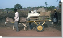 Photo: Donkey cart in Guinea Bissau by Paul Starkey �